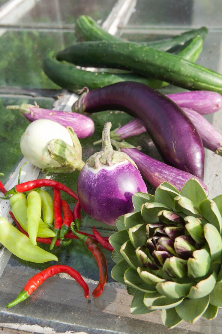 kasvihuoneessa kasvatettavia vihanneksia